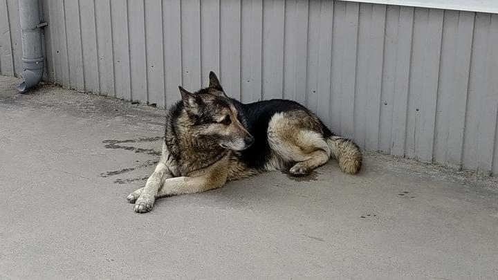 Бездомных животных во Владимирской области будут держать в приютах пожизненно