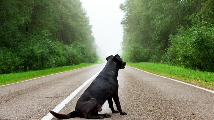В Кстовском районе домашняя собака насмерть загрызла пенсионерку