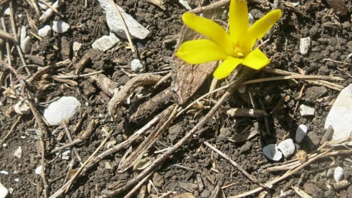 Редчайший загадочный цветок нашли на горе Шизе в Краснодарском крае