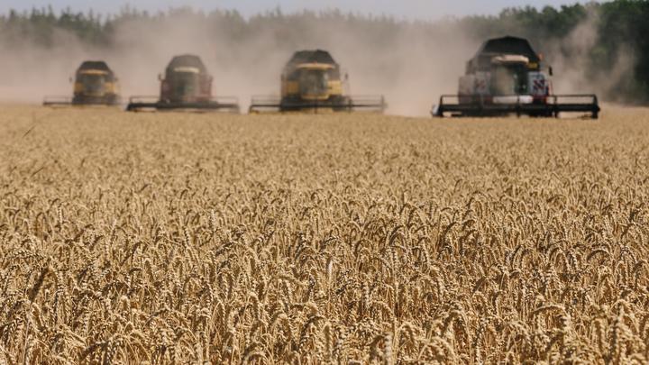 Американские фермеры впали в депрессию из-за рекордных урожаев пшеницы в России