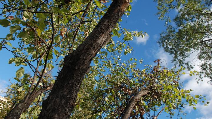 Власти закрыли глаза на варварскую вырубку леса в Свердловской области