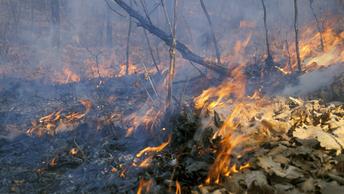 В три раза увеличилось количество лесных пожаров в Забайкалье