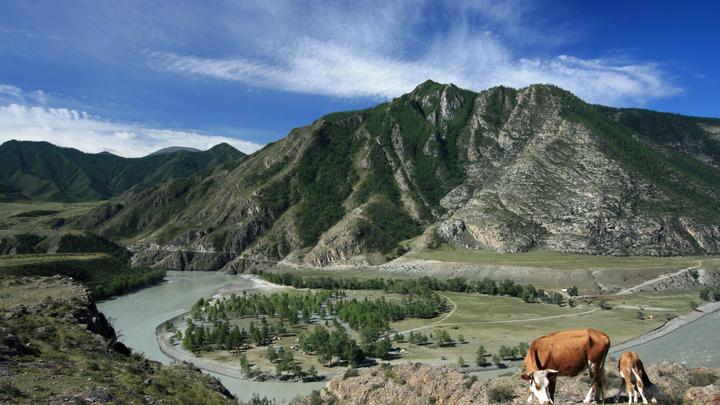 Удешевить поездки: Премьер Мишустин поручил полностью открыть Горный Алтай для туристов к 1 июля