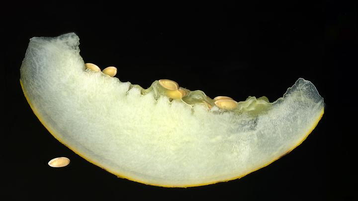 Запретный плод. В Роскачестве рассказали, кому нельзя есть дыни