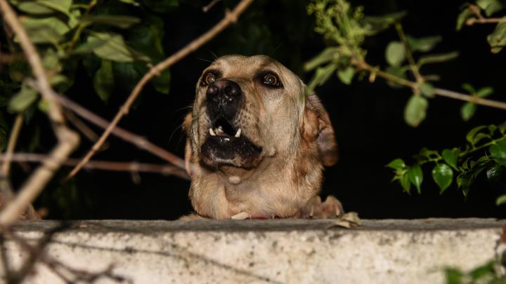 В Новосибирске проводят проверку после очередного нападения бездомной собаки на ребёнка