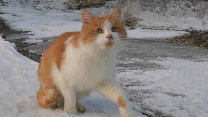 Взять никто не отваживается: На Урале кот второй год ждет погибших в пожаре хозяев, не покидая сгоревший дом