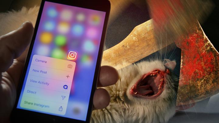 «Сегодня котёнка, а завтра родную мать»: Соцсети о садистском убийстве на Алтае