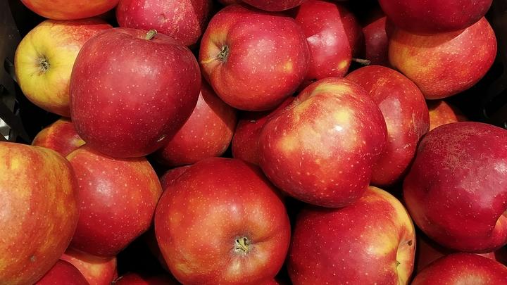 Лишний урожай яблок утилизировали в Подмосковье