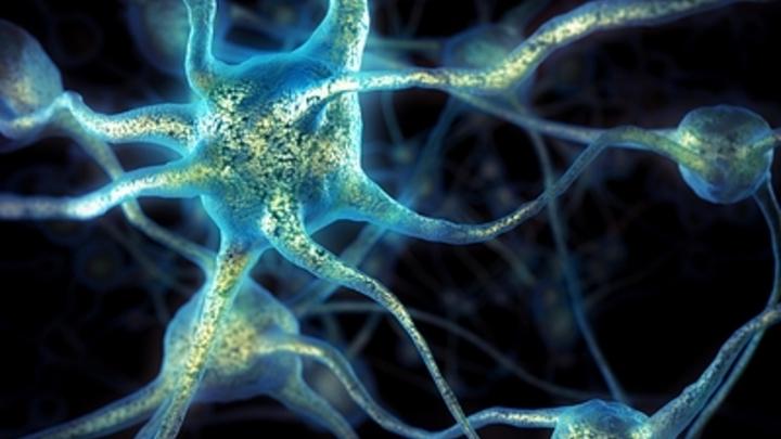 Нервные клетки не восстанавливаются, но создаются: Немецкие ученые смогли омолодить мозг мыши