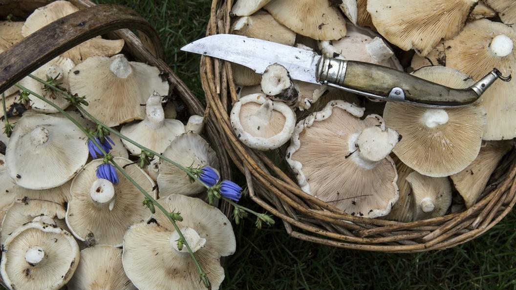 Сбор грибов в Польше закончился перерезанным горлом