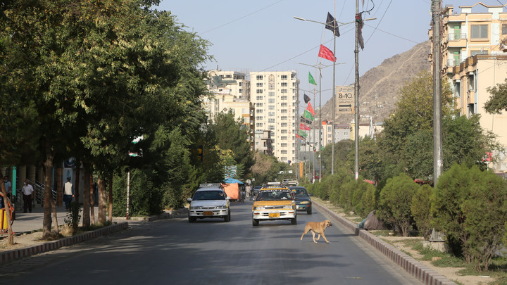 С талибами* обсудят по списочку вопросы безопасности посольства России в Кабуле