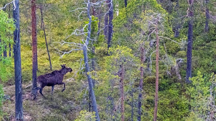 Все звери в России стоят 267 млрд рублей, леса - почти 9 триллионов рублей