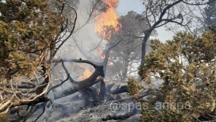120 млн рублей и годы восстановления: Специалисты оценили ущерб пожара на Утрише