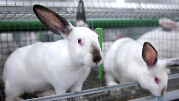 Кролики - не только ценный мех: В Подольске построят  крупнейшую кроличью ферму