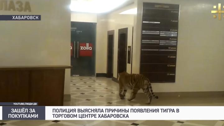 Тигр в торговом центре Хабаровска оказался актером