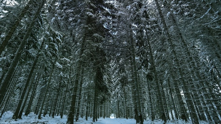 Лес под Ярославлем в поисках убийцы прочесывают бойцы Росгвардии