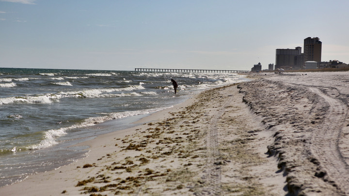 Ураган Харви выбросил на берег Техаса загадочного морского угря