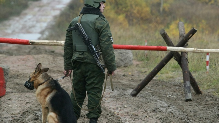 Шастают всякие: Украинские пограничники спустили собак на представителей ОБСЕ