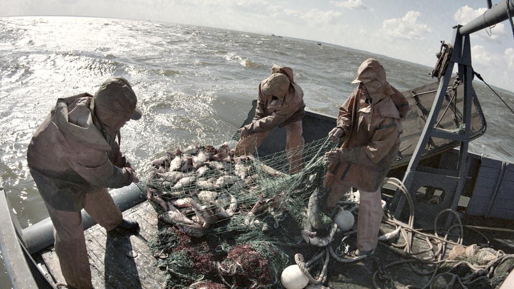 Русскую рыбу вернут на родину