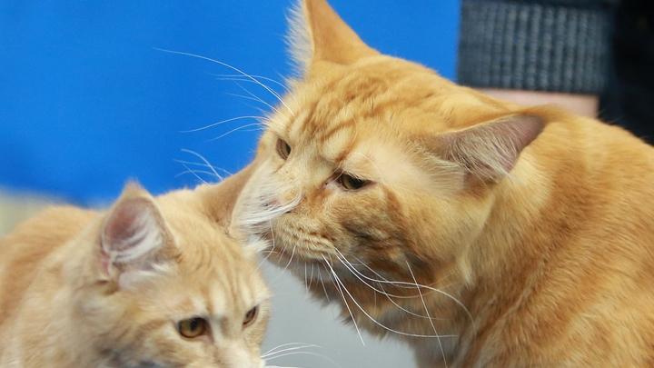 Операция по спасению котиков: В Питере эвакуировали самое крупное кошачье кафе в Европе