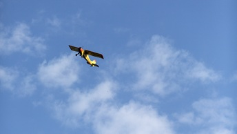 Сто витков в плоском штопоре: Авиатор из Читы вошелв Книгу рекордов Гиннесса