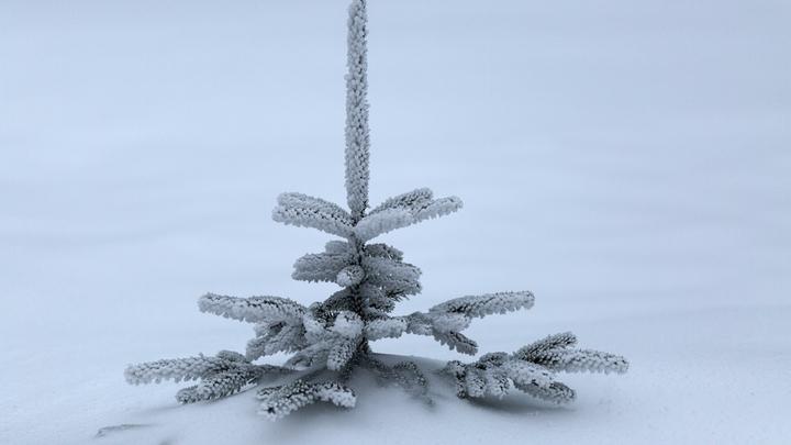 Главная новогодняя елка Украины вызвала горький смех украинцев