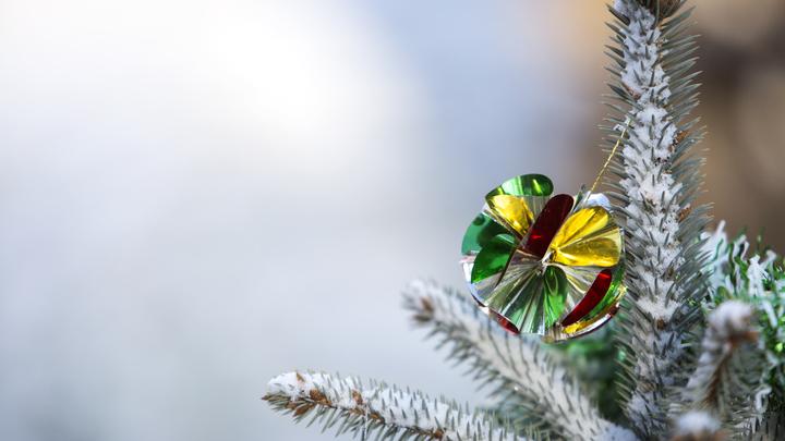 И елку свою лысую заберите: Молдавия потребует у Украины возмещения расходов на дерево