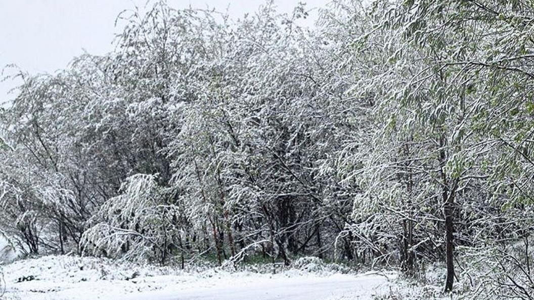 В канун Нового года в Москве выпадет снег