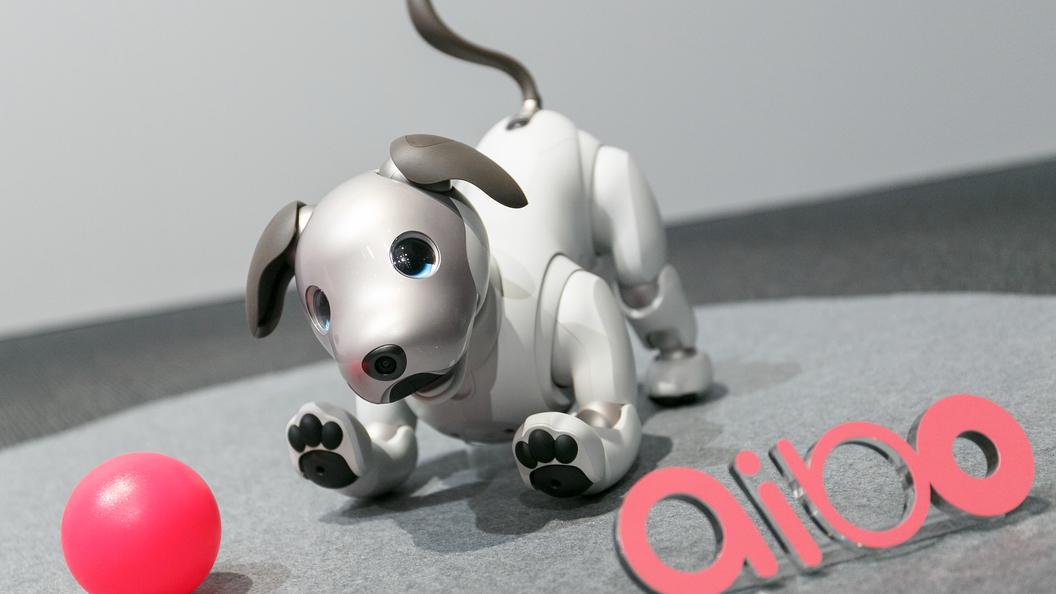 Сони представила робота-собачку обновленного поколения с деталями искусственного интеллекта