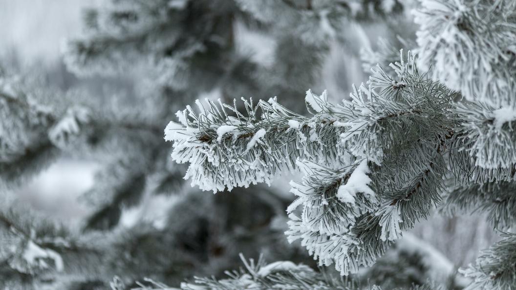 Синоптики опровергли прогноз с62-градусными морозами вАлтайском крае