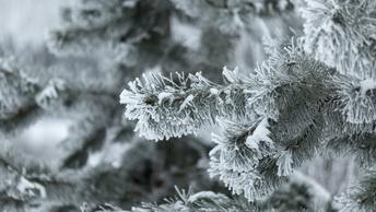 Всего -40 градусов: Синоптики уточнили прогноз об аномальных холодах на Алтае