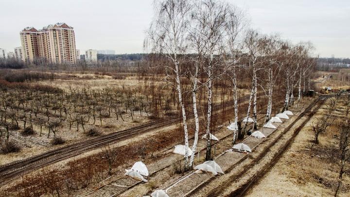 Тимирязевская академия: Война науки и бюрократии