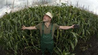 В штате Огайо 10 тысяч тонн кукурузы пошли на корм мышам: Рухнул зерновой бункер