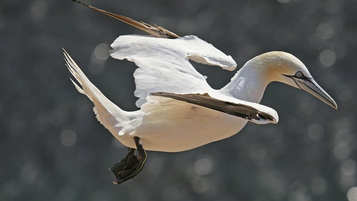 В Новой Зеландии умерла птица, безнадежно любившая свою бетонную подругу