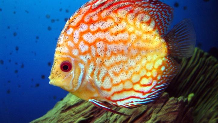 Ученые: Рыбы раньше не плавали, а ходили