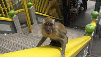 Частный московский зоопарк лишился контрабандных редких животных