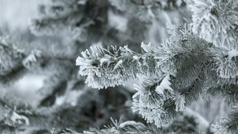 Весна откладывается: Аномальные морозы придут в Москву на днях
