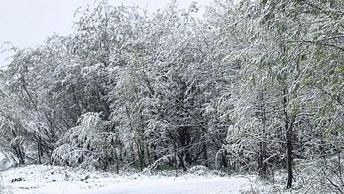 Экстремальные морозы: МЧС предупреждает москвичей о понижении температуры до минус 25 °C