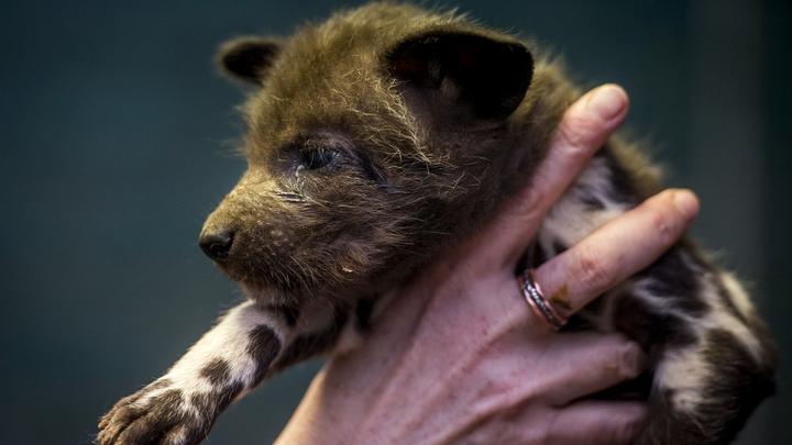 Добрые дела продолжаются: Под Краснодаром мужчина намеренно раздавил двух щенков