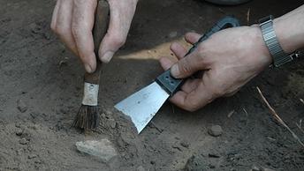 Смытие показало: Британцы обнаружили после шторма лес возрастом в 7 тысяч лет - видео