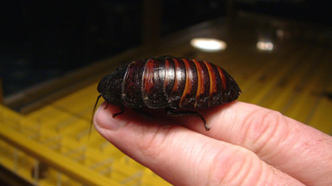 Ученые узнали причину живучести тараканов 23марта в10:46
