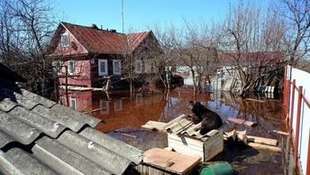Паводок на Алтае: Семь сел оказались в зоне бедствия
