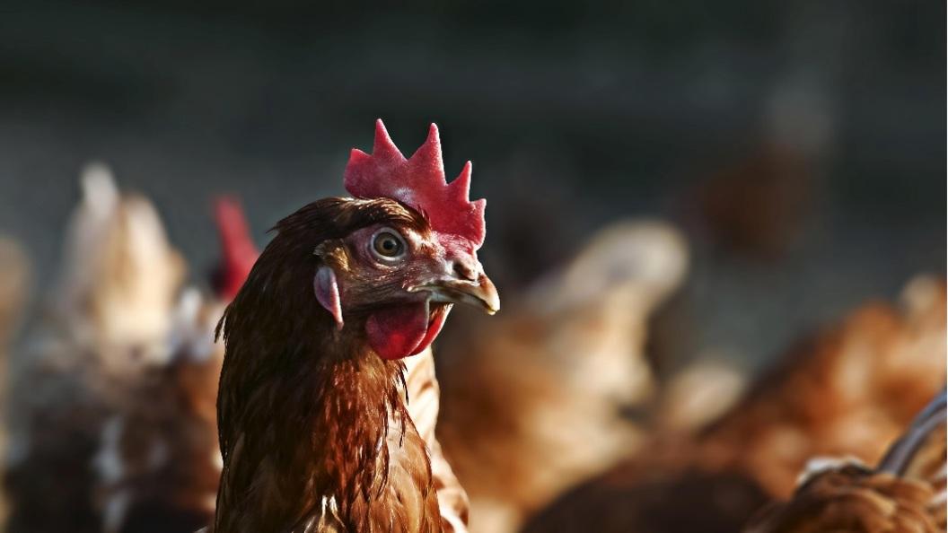 Индикатор роскошной жизни: Владельцам кур и коз откажут в соцпомощи