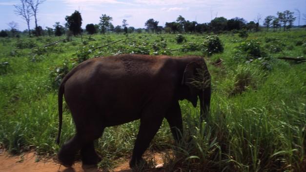 На Шри-Ланке голодный слон застрял головой в джипе с туристами
