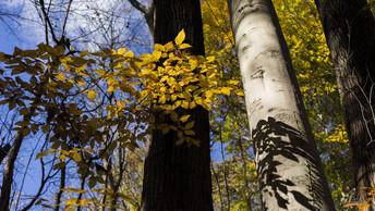 Валежник для всех и каждого: Госдума приравняла упавшие деревья к недревесным ресурсам