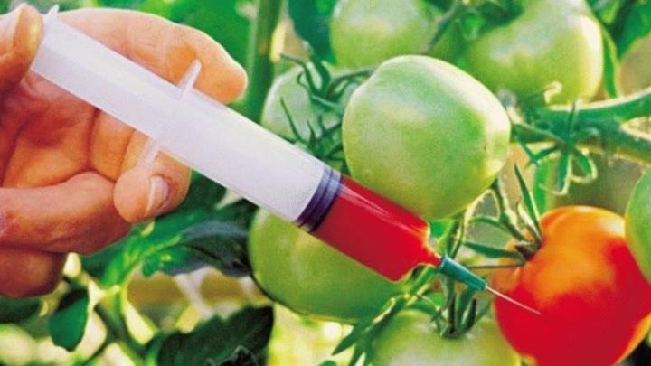 ГМО-монстр с помощью ФАС готовит захват рынка России