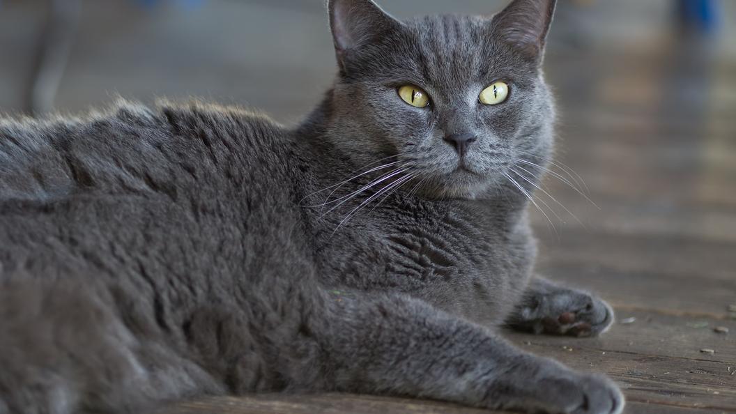 Ростуризм рассказал об опасности шведских кошек и птиц
