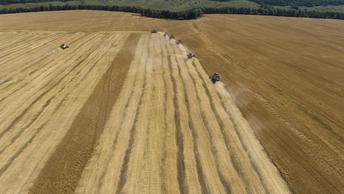 Ни пшеницу продавать, ни в Сирии воевать: Франция изгнана Россией с рынка зерна в Африке