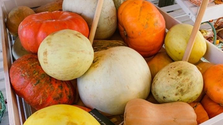 Агроном рассказала о сборе урожая тыкв и рецептах из неё
