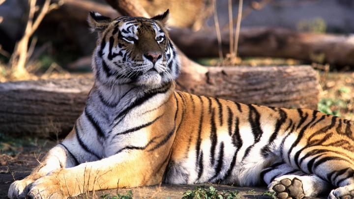 В Калининграде тренировались ловить плюшевого «тигра»